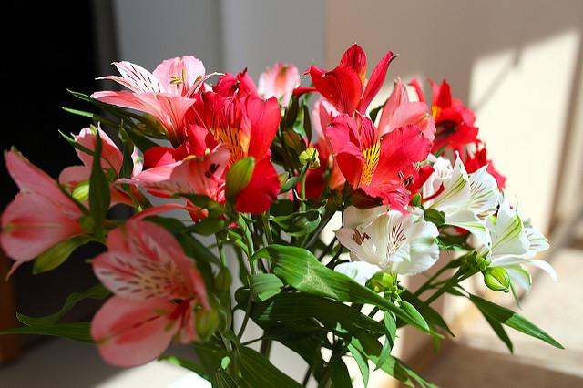 Válassza Ön is a virágküldő szolgálat Debrecent!